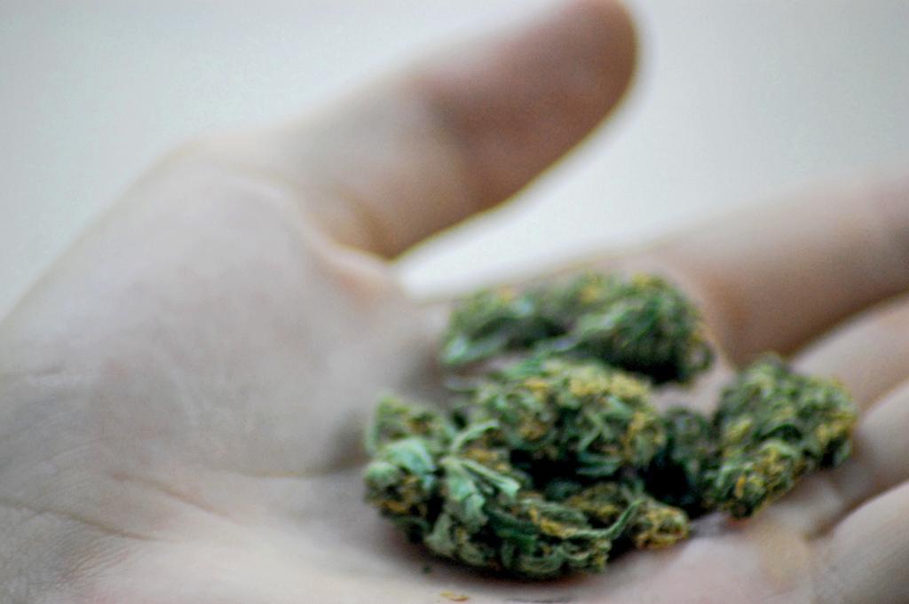 marijuana in hand