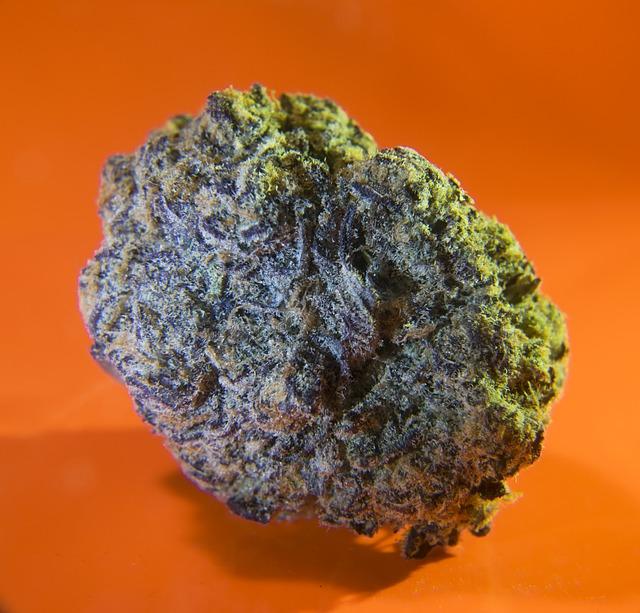 cannabis bud orange background