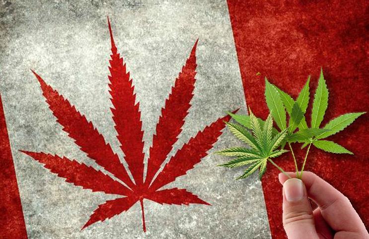 Reverse Mergers Bring American Cannabis Companies to Canada