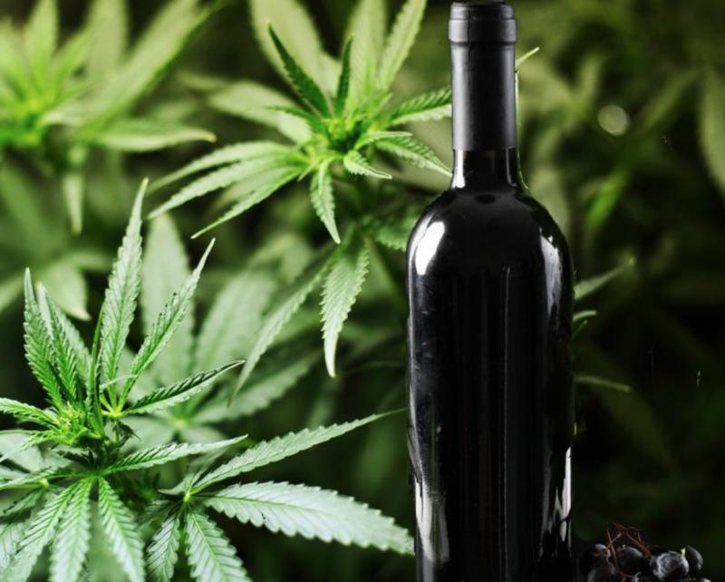 Марихуана запой как получают марихуану