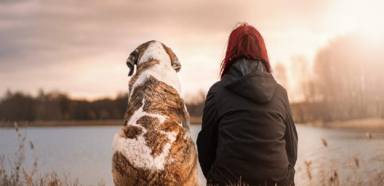 dog pet animal veterinarian